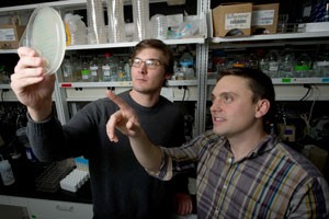 Justin Meyer and Devin Dobias examine the growth of bacteria in the Lenski lab.