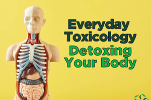 Everyday Toxicology – Digging Deeper, Detoxing Your Body