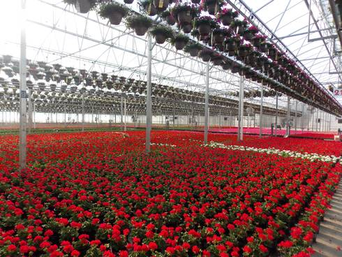 In Michigan S Nursery And Greenhouse Industry Part 1 I Summarized A 2017 Survey Performed By The National Agricultural Statistics Service N Of