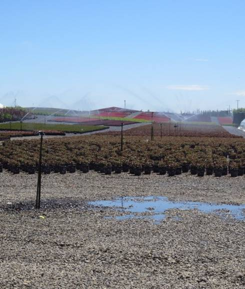 Nursery Overhead Irrigation System All Photos By Tom Fernandez Msu