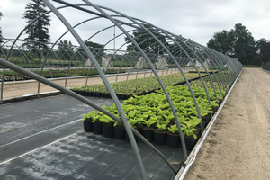 Nursery production tour set for Aug. 7, 2019 in west Michigan