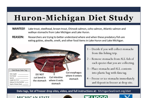 diet study instructions and picture showing detail of fish stomach. Information included in article. Video link to instructions also included in article.