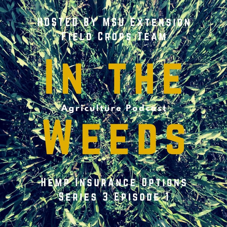 In the Weeds graphic promo