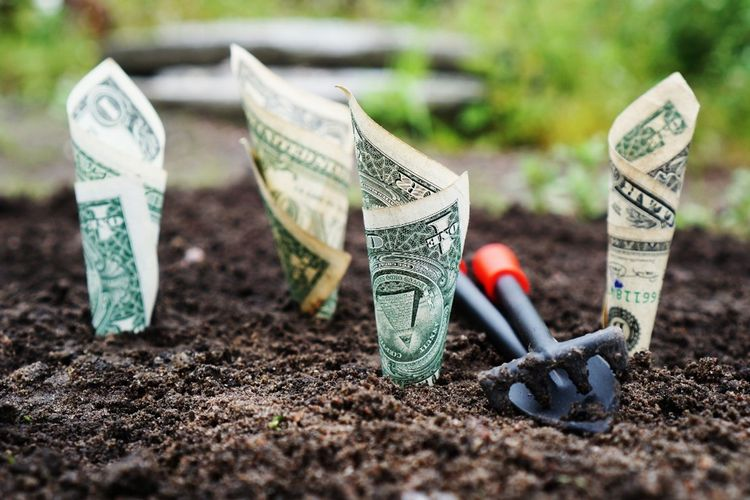 dollar bills and garden tool in soil pixabay.com