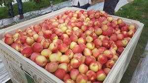 Southwest Michigan fruit update – Sept. 3, 2019