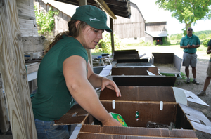 Women packing vegetables in box