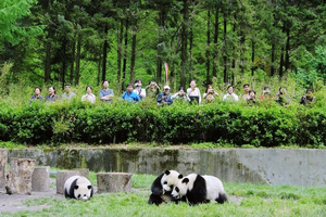 Striving and stumbling towards sustainability amongst pandas and people