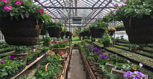 Garden center retail survival strategy series: Overcoming challenges with a holistic approach