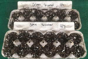 Reduce, reuse and recycle for seed germination
