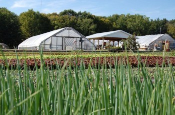 MSU Student Organic Farm. Photo courtesy Katy Joe DeSantis.