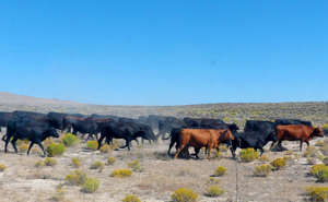 Agriculture diversity: Spotlight on Nevada