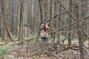 MSU faculty optimize remote field experiences for forestry students