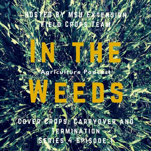 In the Weeds promo graphic