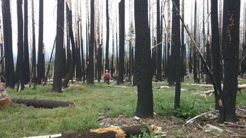 This California forest burned at high intensity, which killed all of the large trees. Three years after the fire, there are no live trees or tree seedlings. Researchers want to discover ways to increase forest resilience to avoid ecosystem conversion.