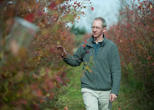 Rufus Isaacs, MSU professor of entomology, examines captured spotted wing drosophila in a blueberry field.