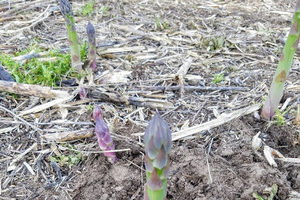 West central Michigan vegetable update – April 24, 2019