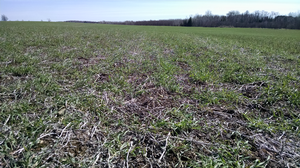 Northeast Michigan field crop regional report – April 28, 2016