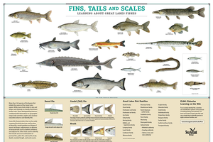 This poster is available at michiganseagrant.org. Photo Credit: Michigan Sea Grant