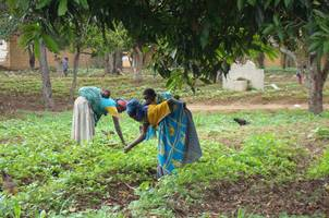 Farmers tend to their field in Angola