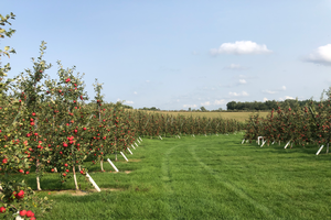 Grand Rapids area apple maturity report – Sept. 23, 2020