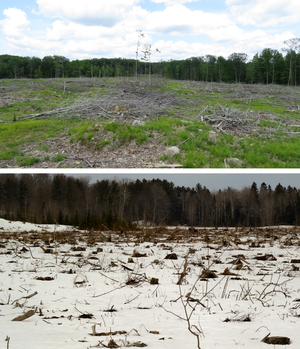 "The top photo is a clearcut that successfully regenerated the stand of aspen mixed with other species. The bottom photo is a ""terminal harvest"" of cedar, converting the woodland to a pasture."