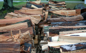 Rows of stacked firewood. Photo credit: Robert Trickel, North Carolina Forest Service, Bugwood.org