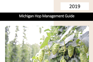 Updated 2019 hop management guide available to Michigan hop growers