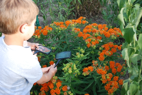 Boy holding magnifying glass to flowers at Kellogg Biological Station