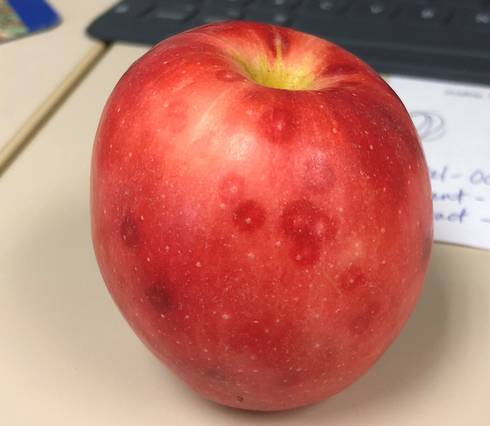 Reddish spots on Gala apple caused by San Jose scale