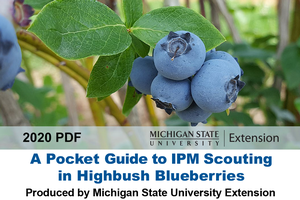 Mobile-friendly guide for blueberry IPM scouting is now available