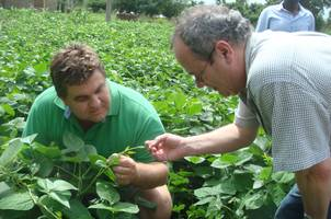 MSU entomology professor Barry Pittendrigh (left) examines a cowpea plant.