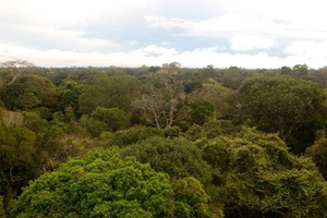 View of a tropical forest in the Amazon from the top of the 54m tower in Caxiuanã, Brazil.