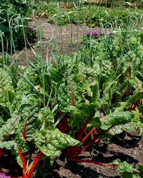 Thinking About Planting Your Own Vegetable Garden May Bring To Mind Images  Of Bountiful Fresh And Healthy Produce. Advance Planning Will Be The Key To  Your ...