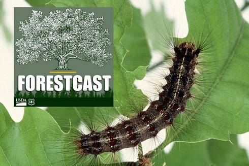 Forestcast logo