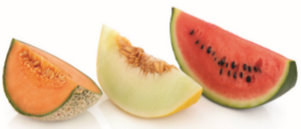 A picture of watermelon, cantaloupe, and honeydew