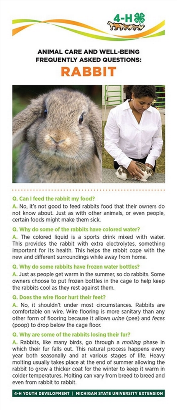Photo of rabbit on a bookmark and rabbit facts.