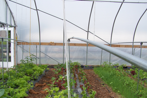 Reduce weather-related risks in fruit production with high tunnels