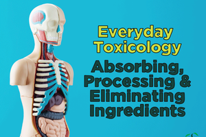 Everyday Toxicology – Absorbing, Processing & Eliminating Ingredients