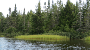 Understanding lakeshore ecosystems — Part 2: Inland lakes
