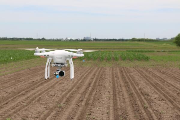 Corn nitrogen management assessment using multispectral drone