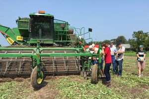 Harvesting a Michigan cucumber field.