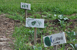 Spring crop planning for the school garden: Part II