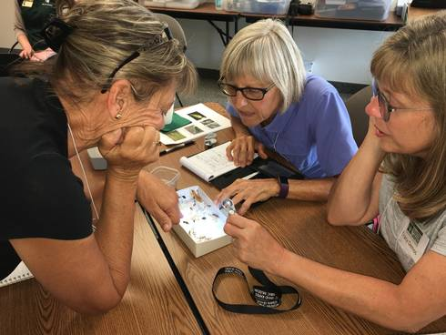 Kent County Extension Master Gardener responders evaluate insect samples