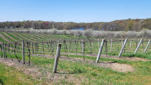 The slope in this vineyard and cherry orchard allows cold air to drain down off the fruit planting into the lake basin below. All photos by Mark Longstroth, MSU Extension.