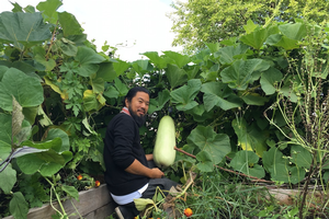 Shane harvesting an opo squash in his backyard garden.