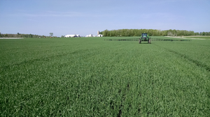 A late second application of nitrogen fertilizer is made in wheat for research investigating intensive management approaches. Photo: James DeDecker, MSU Extension.