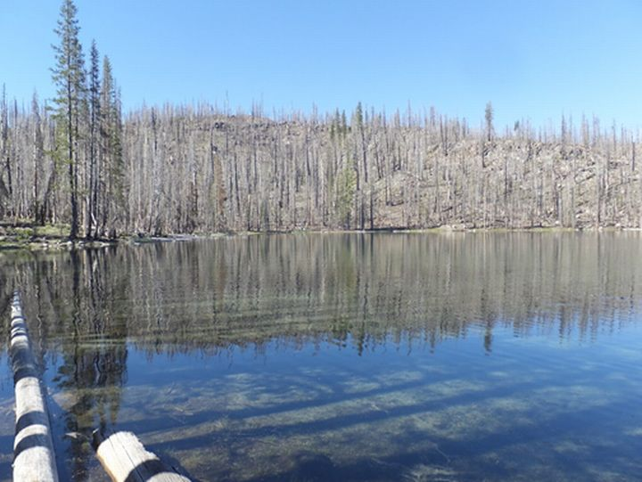 Damage from the 2012 Reading Fire in Lassen Volcanic National Park, CA, photographed in 2016. Wildfires can have many effects on lakes, including increasing concentrations of nutrients and contaminants. Photos: Ian McCullough