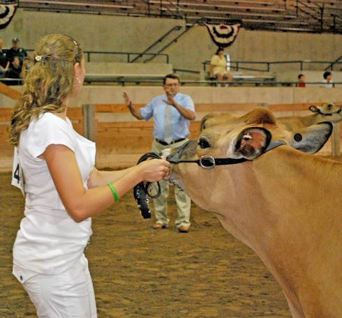 Always keep an eye on the judge during showmanship class. Photo by MSU.