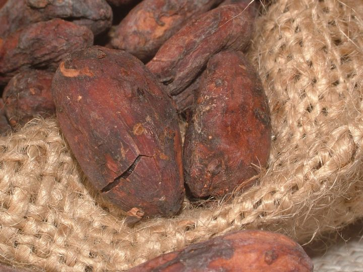 Cacao beans contain a wealth of antioxidants and essential vitamins and minerals.