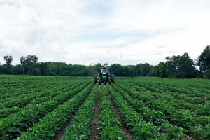 Research will investigate if foliar fertilizer and fungicide applications increase soybean yields